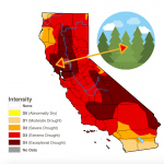Drought Impacts Wildfire: A Dangerous Cycle