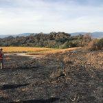 How Does Wildfire Impact Soil Health?