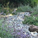 Firewise and Beautiful Landscaping